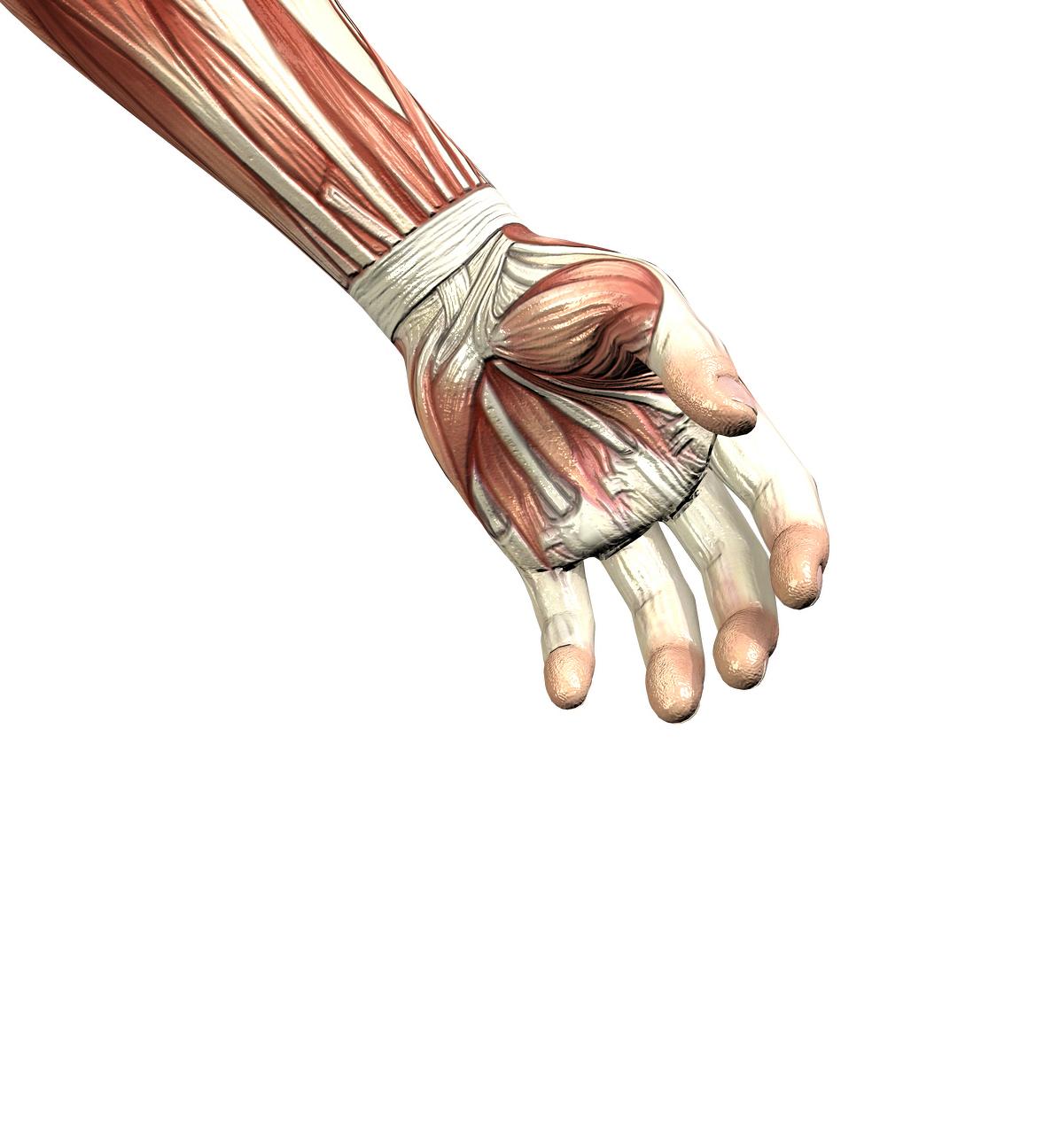 Left Wrist