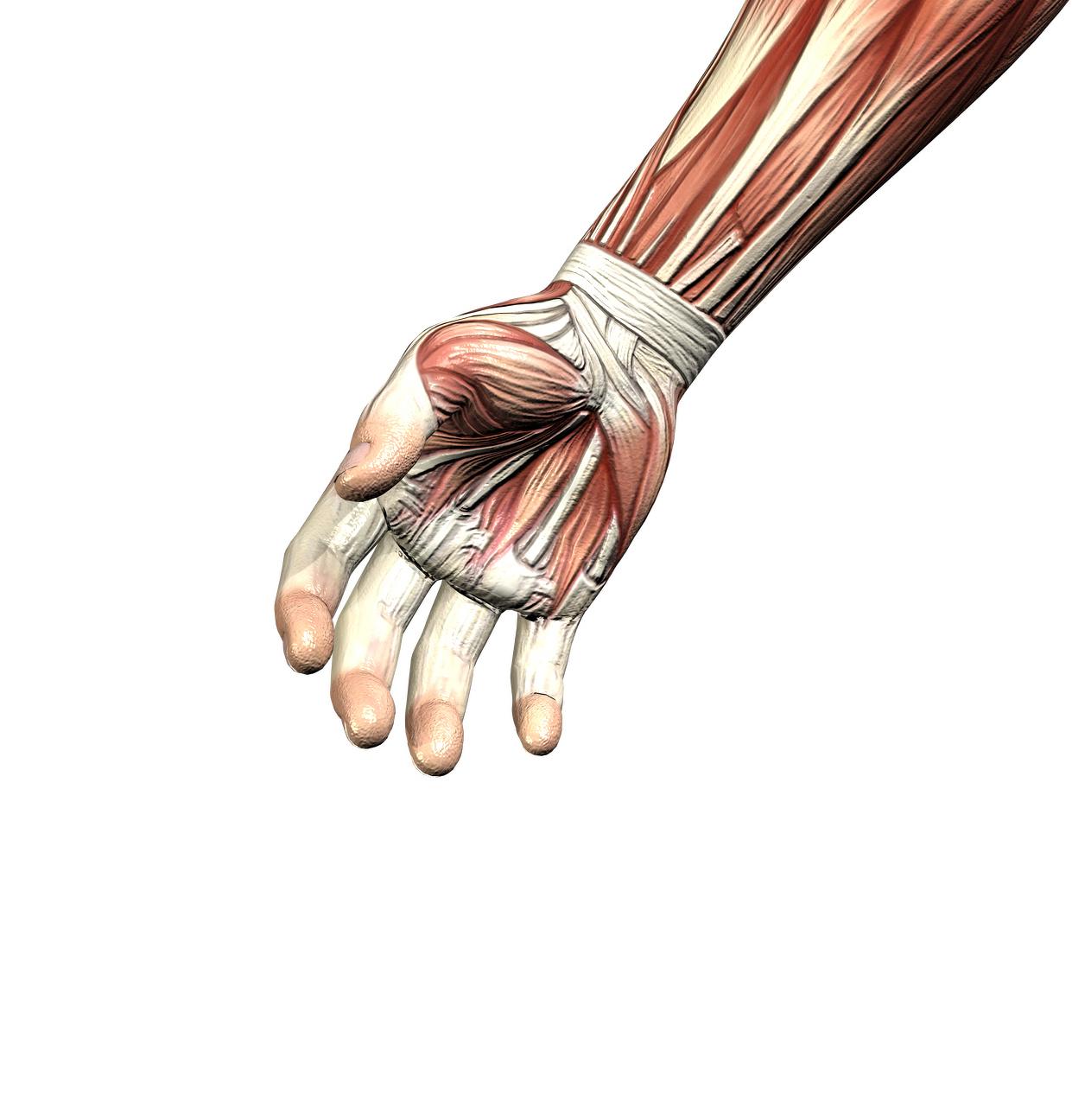 Right wrist